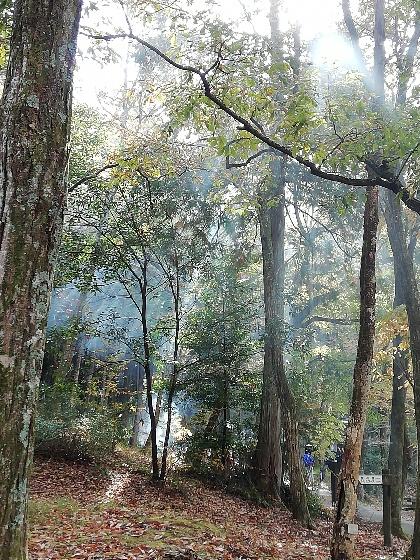 北山キャンプ場の木漏れ日