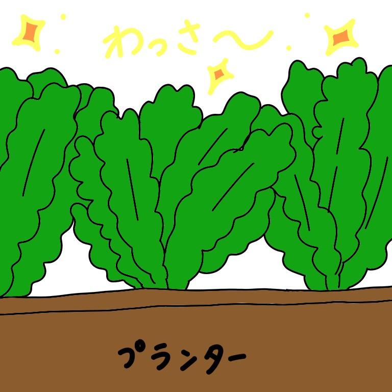イラスト かつお菜 家庭菜園