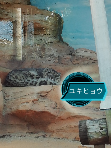 熊本市動植物園 ユキヒョウ