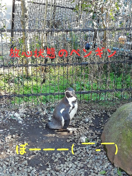 熊本市動植物園 ペンギン