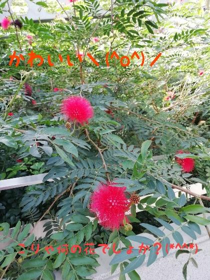 熊本市動植物園 花の休憩所 赤い花