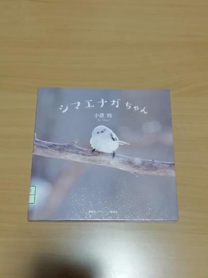 画像 シマエナガちゃん 野鳥 北海道 本 白い 小原玲