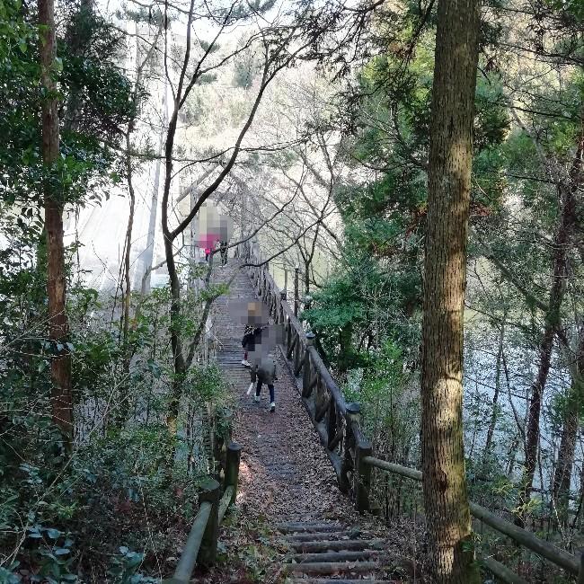 キャンプ 散歩 朝 写真 画像 森 探検 子供