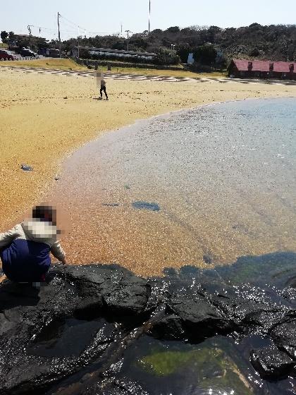 波戸岬 砂浜 海岸 綺麗 写真 画像 海