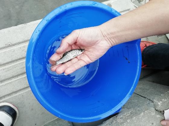 クリーク 魚 稚魚 釣り 写真 画像