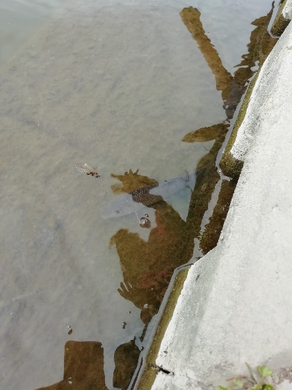 放流 クリーク 魚 逃がす ウキ釣り 写真 画像