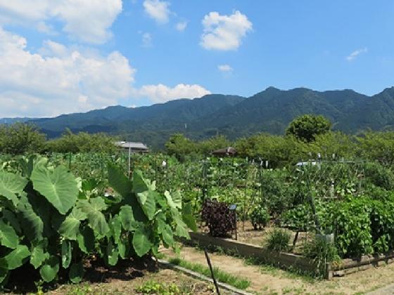 久留米ふれあい農業公園キャンプ場 市民ふれあい農園 写真 画像 福岡県久留米市