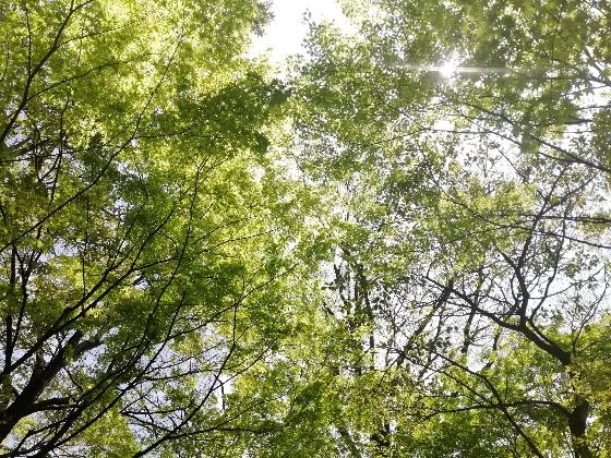新緑 空 木漏れ日 画像 写真 美しい 初夏