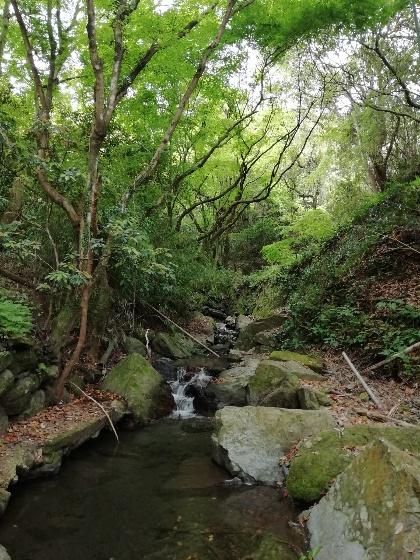 森林 川 マイナスイオン 画像 写真 木々 癒し