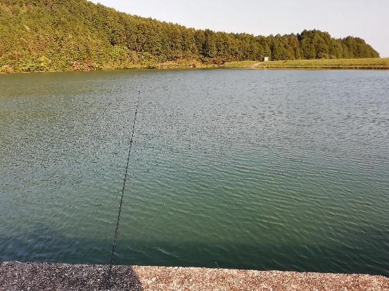 釣り 池 ブラック バス 写真 画像 魚 楽しい 大きい ルアー フィッシング