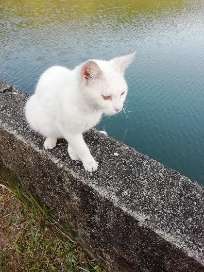 白 猫 野良 人懐っこい 馴れてる かわいい 写真 画像