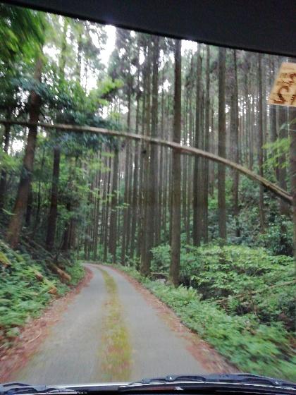 倒れる 木 森林 山 写真 画像 車道