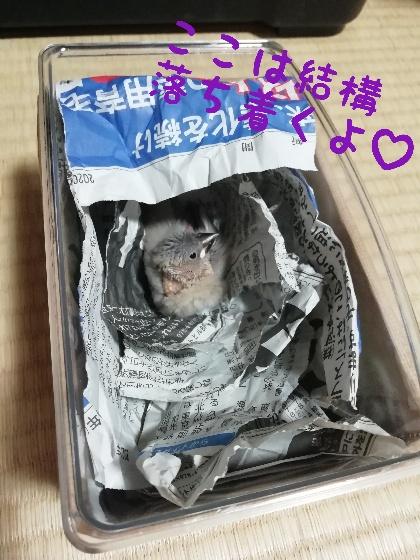 桜文鳥 ヒナ 虫かご 飼い方 新聞紙 暖かい 写真 画像