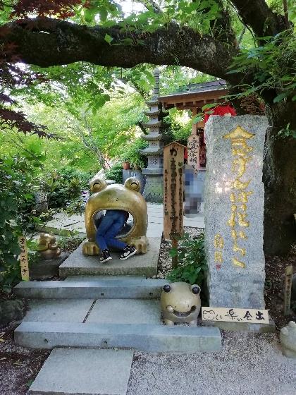 福岡県小郡市 かえる寺 如意輪寺 写真 画像 かえる くぐりかえる
