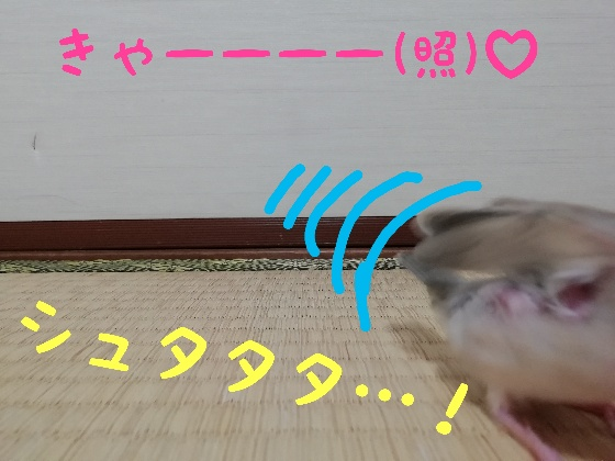 桜文鳥 ヒナ 逃げる 恥ずかしい 走る 画像 写真 面白い