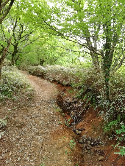 佐賀県 小城市 天山 登山 家族 険しい 山道 写真 画像