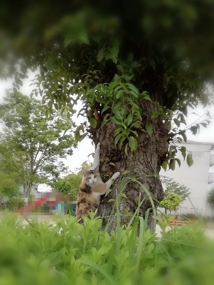 木登り 猫 降りれない 写真 画像