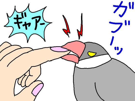 文鳥 噛む 痛い 換羽期 イラスト 噛みつく 桜文鳥 指