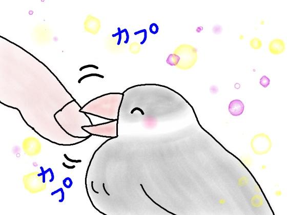 文鳥 イラスト 画像 甘噛み かわいい
