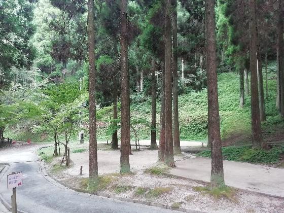 北山キャンプ場 夏 キャンプ 佐賀県 アウトドア 森林 写真 画像