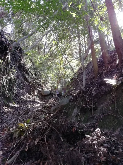 十坊山登山 中村登山口 登山 福岡県 画像 写真 背振 森 森林 岩