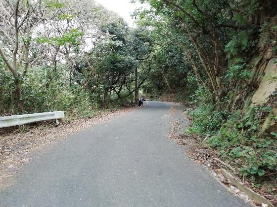 立石山登山 立石山 登山 写真 画像  糸島 山道 海 車道