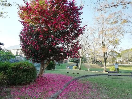 秋 公園 景色 美しい 紅葉 写真 画像 青空 ピンク 落ち葉