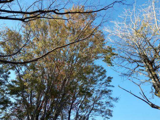 秋 公園 景色 美しい 紅葉 写真 画像 青空