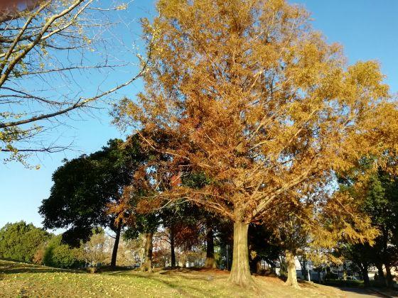 秋 公園 景色 美しい 紅葉 写真 画像 青空 落ち葉