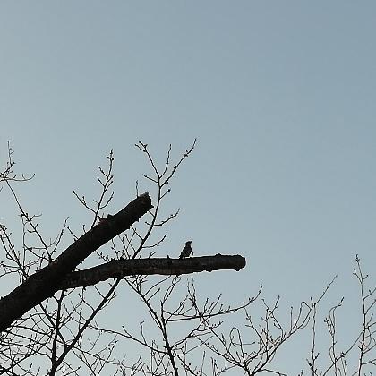 コゲラ キツツキ 福岡 野鳥 写真 画像