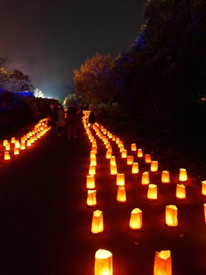 吉野ヶ里歴史公園 2020 画像 写真 光の響 イベント 光の地上絵 光の道 通路