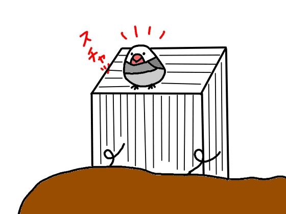 イラスト おもしろい 漫画 かわいい 画像 文鳥