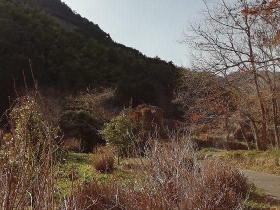 冬 田舎 山 のどか 写真 画像 癒やし 枯れ葉