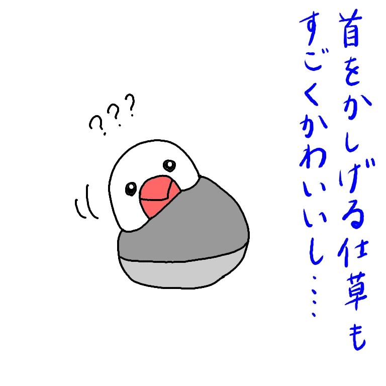 文鳥 イラスト ごま塩文鳥 かわいい 画像 漫画