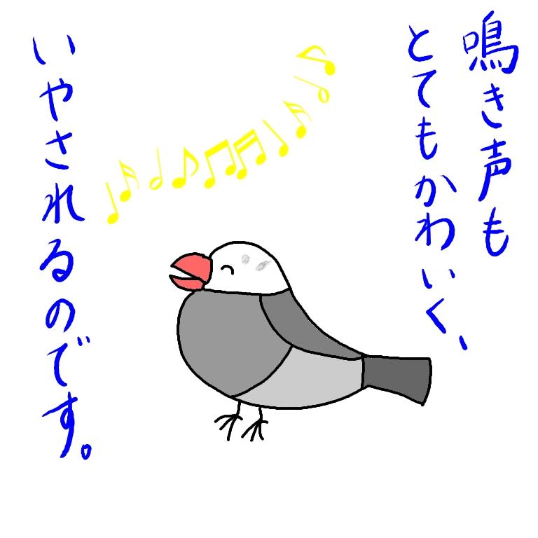 文鳥 ごま塩文鳥 イラスト 手乗り 画像 漫画 かわいい