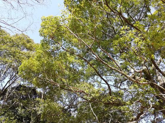 春の兆し 春 新緑 写真 画像