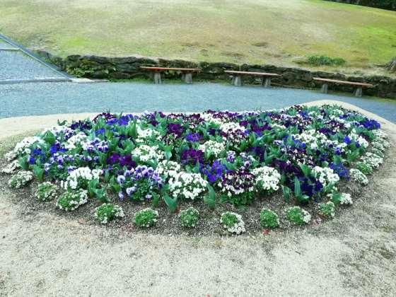 春 花 パンジー ビオラ 写真 画像 かわいい