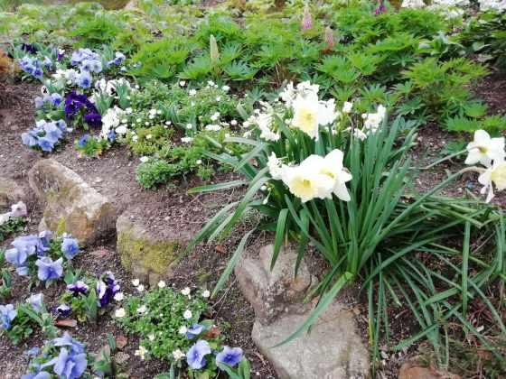 春 花 写真 画像 美しい かわいい きれい