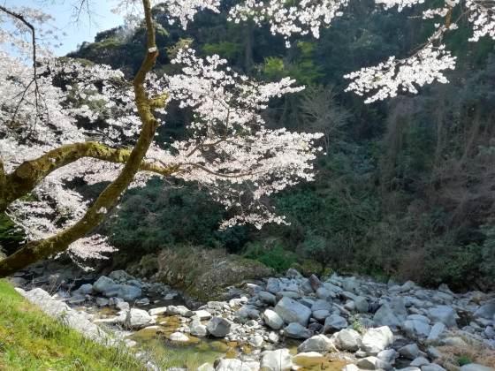 春 景色 桜 風景 のどか 写真 画像 山 癒やし