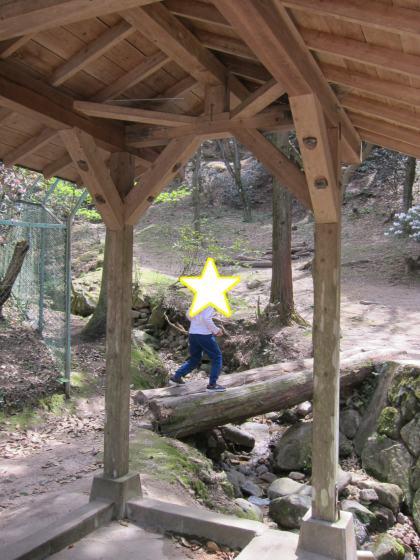 昭和の森キャンプ場 キャンプ アウトドア 森 写真 画像