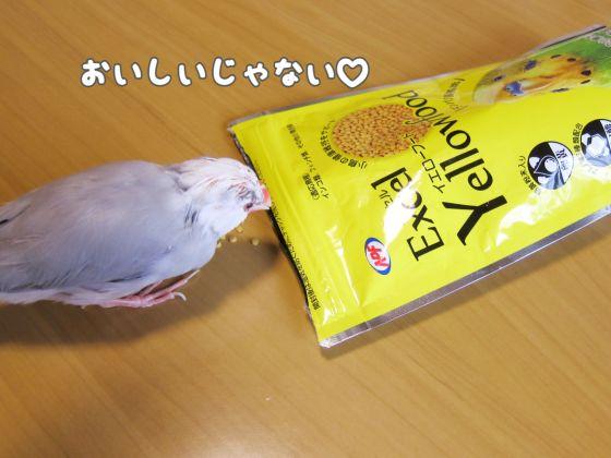 エクセル イエローフード 写真 画像 インコ フィンチ 小鳥 黄色
