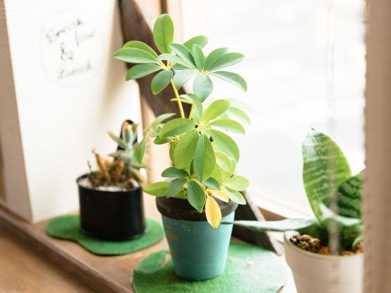 インテリア 部屋 おしゃれ 画像 かわいい 写真 植物 観葉植物