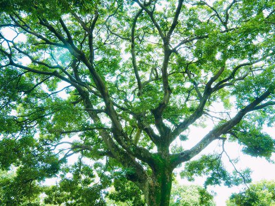 木漏れ日 新緑 写真 画像