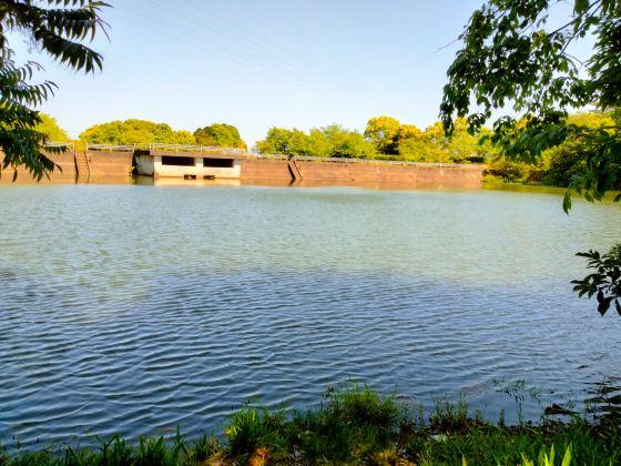 魚釣り 釣り 池 バス ブルーギル 写真 画像
