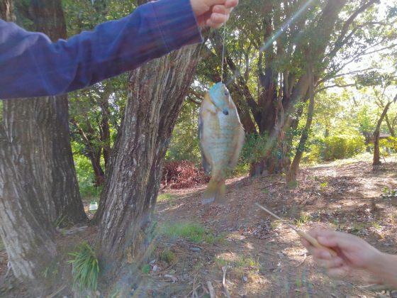 池 ギル ブルーギル 魚釣り 釣り 写真 画像 子供