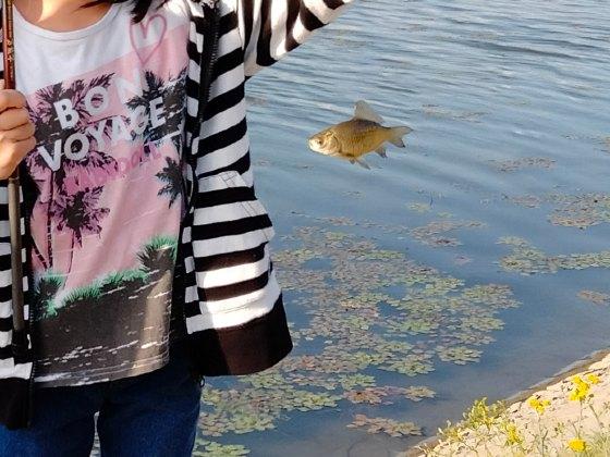 釣り 魚釣り フナ フナ釣り 子供 クリーク 写真 画像