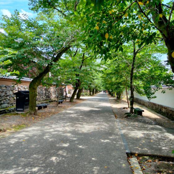 朝倉市 秋月城跡 秋月 観光地 写真 画像