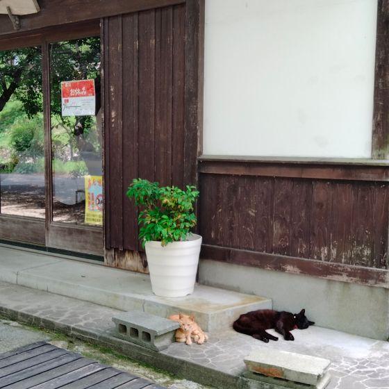 秋月 秋月城下町 猫  写真 画像 朝倉市