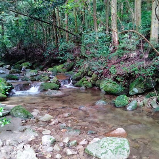 渓谷 御手洗の滝 佐賀県 写真 画像 川 涼 夏