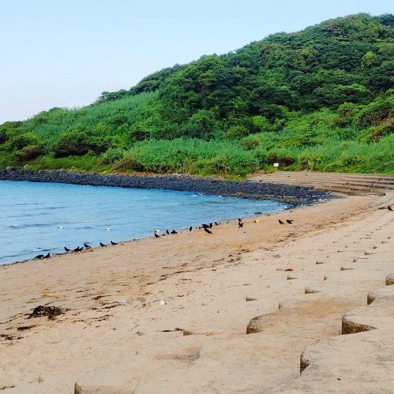 相賀の浜 カラス 群れ 写真 画像